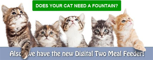 Does Your Cat Need a Fountain? - Also, we are featuring the new Digital Two Meal Feeder