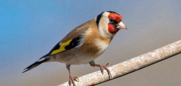 Unis pour stopper l'abattage et le commerce illicites des oiseaux migrateurs sauvages en Afrique du nord