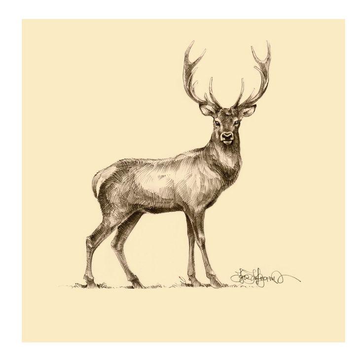 deer sketch - Google Search