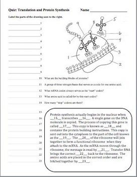 Best 25+ Dna synthesis ideas only on Pinterest | Transcription and ...