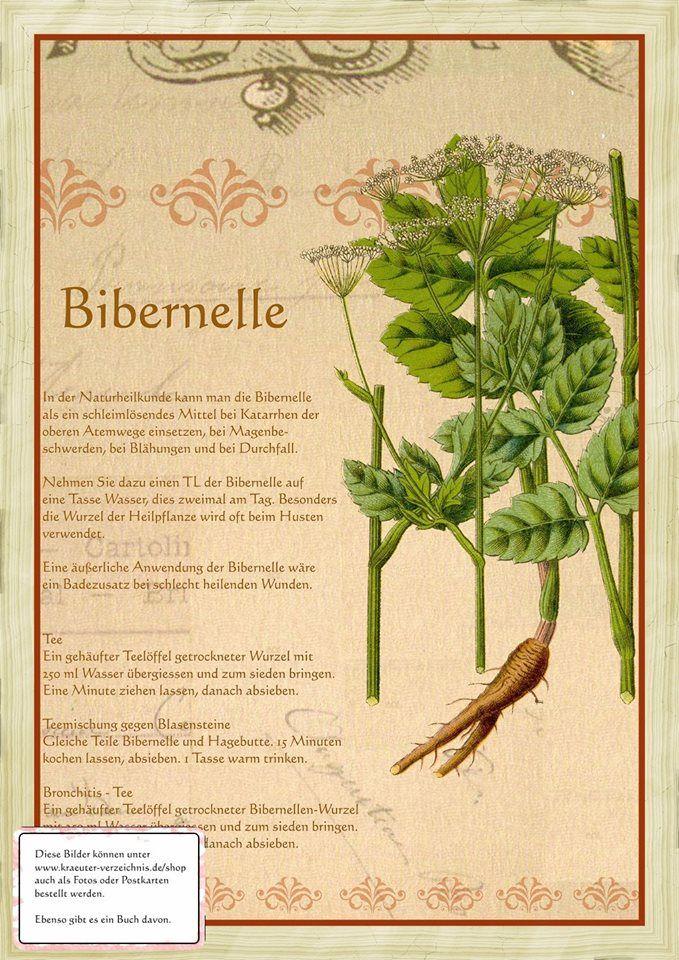Bibernelle http://www.kraeuter-verzeichnis.de/
