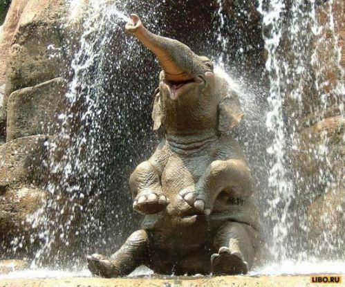 elephants keeping cool | Some amazing facts and information for kids about the lives of African ...
