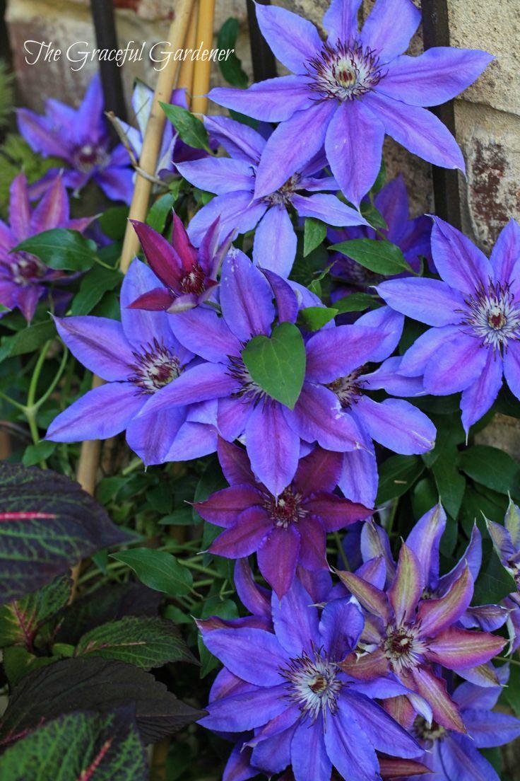 Colorful Shade Garden Ideas