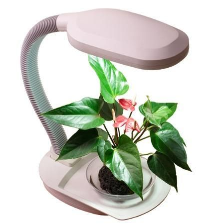 Desktop Farming: 10 Gadgets for Growing a Cubicle Garden (I would have loved this on my desk at work before I retired. - Deb)