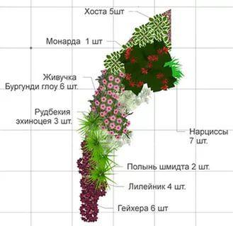 клумба непрерывного цветения из многолетников схемы: 19 тыс изображений найдено в Яндекс.Картинках