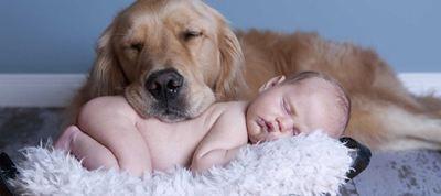 6 ράτσες σκύλων ιδανικές για οικογένεια  | Γόβα Στιλέτο