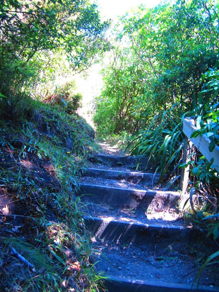 Steps along a beautiful walk- Whakatane