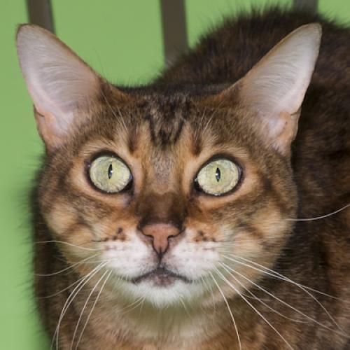 Adopt A Cat Salt Lake City