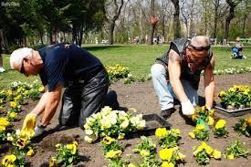 """Képtalálat a következőre: """"önkéntes virágültetés budapest"""""""