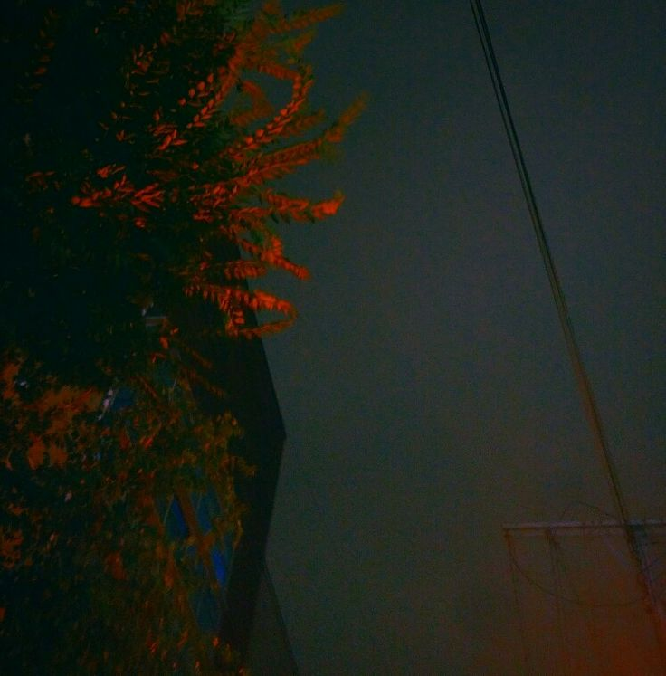 Korea night