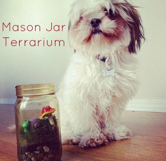Mason Jar TerrariumMason Jars Terrariums, Mason Jar Terrarium