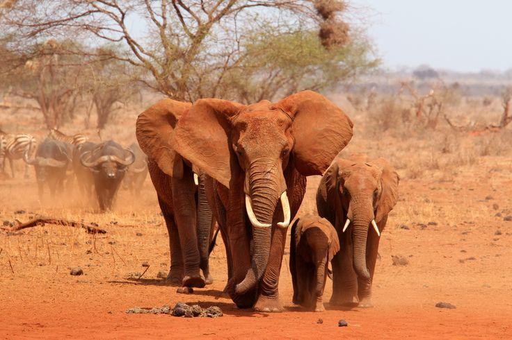 Indrukwekkende olifanten