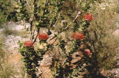 Muchea Tree Farm