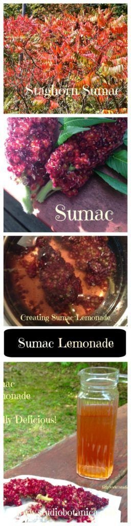 Wildly Delicious Sumac Lemonade - Studio Botanica