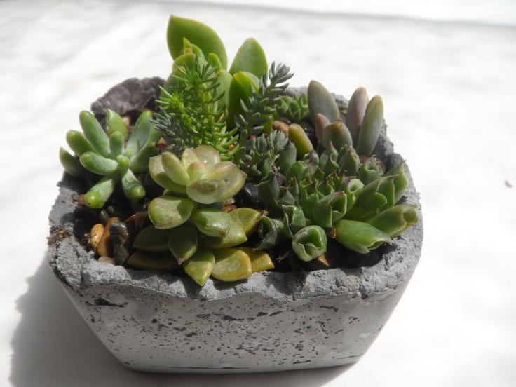 231 Best Images About Colorful Succulents On Pinterest