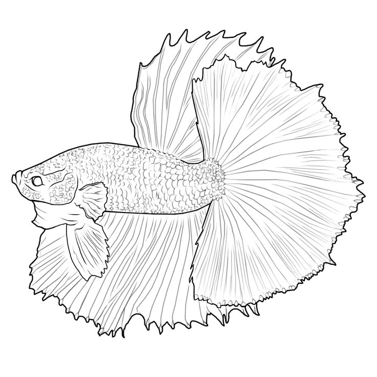 Betta Colouring Pages Page How To Draw A Fish Drawing Coloring