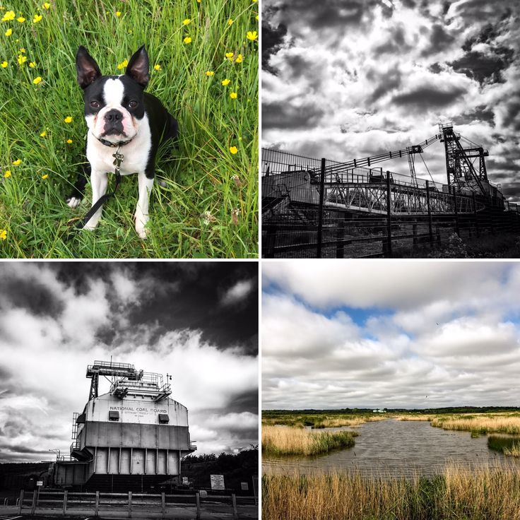 We discovered a lovely dog friendly walk called @Natures_Voice RSPB St Aidan's, it has everything from beautiful buttercups to Bucyrus Erie!