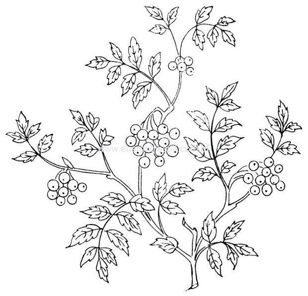 flores31.jpg (620×597)