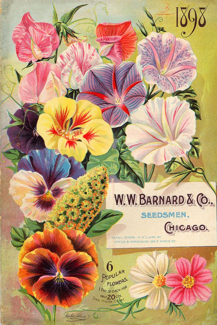 Seed Catalogs from Smithsonian Institution Libraries W.W. BARNARD AND CO.  .1898 ... FRONT COVER