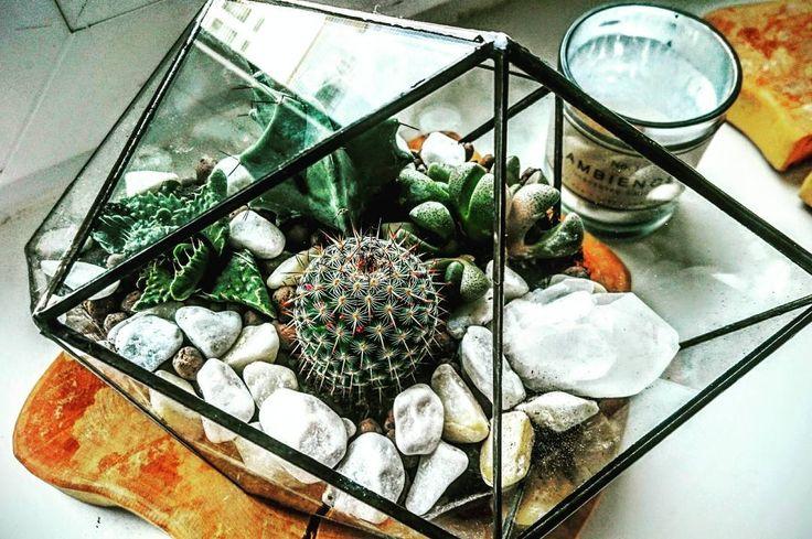 #diy #tumblr #florarium #cactus #style #decor#homedecor #кактус #флорариум #декор
