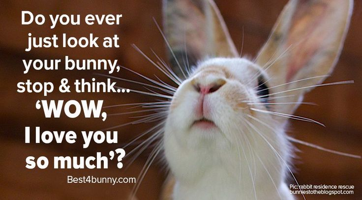 Does this happen to you too? www.best4bunny.com