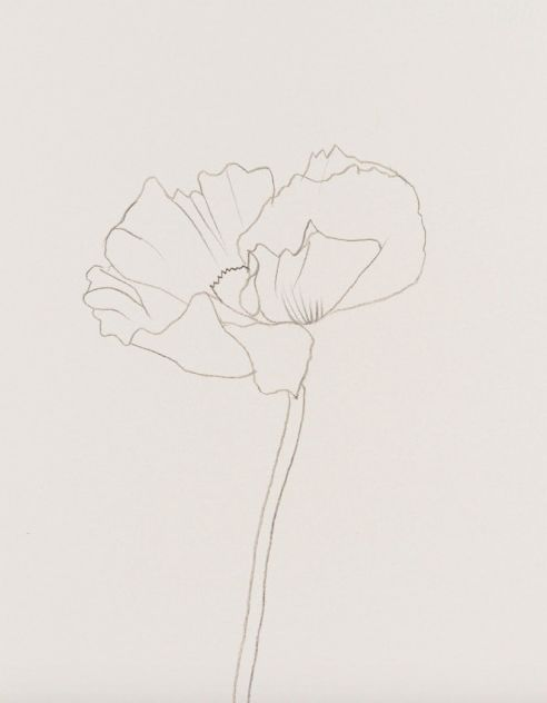 Draw flowers #pencildrawing #floral