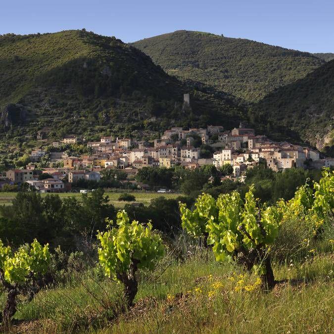 Minervois Saint Chinian Faugeres Et Haut Languedoc Est Une Destination Oenotouristique Reconnue Nationalement Grace A Vig Vignoble Saint Chinian Decouverte