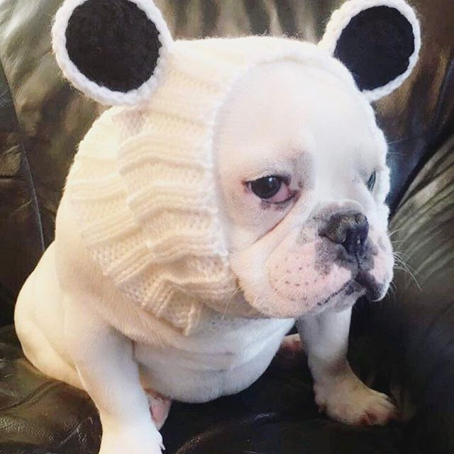 TFW it's Monday but all you want to do is dress up like a Panda and chill. credit: @masonxxlove_the_frenchie  #zoosnoods #PandaBearZooSnood #dogstagram #dogsofinsta #frenchiesofinstagram #mondaymood
