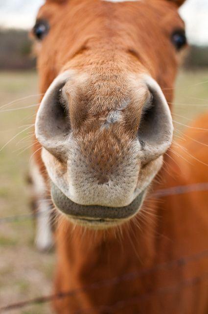 Give me a kissDreams Big, Ponies, A Kisses, Hors Sweets, Hors Nose, Cousins, Horsey Wake, Horsey Horsey, Animal