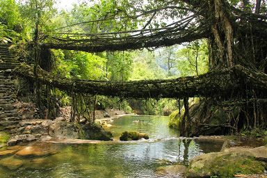The living root bridges, Meghalaya state of northeast India.