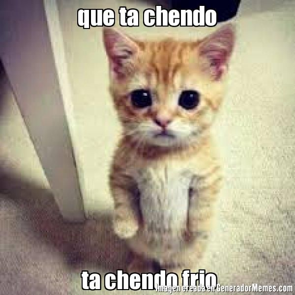 Pin By Angeles Nazareth On Que Lindo Cats Funny Animal Pictures Cats And Kittens