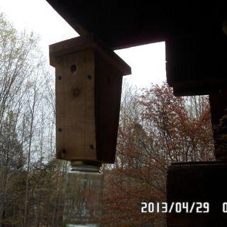 Easy Wood Boring Bee Trap