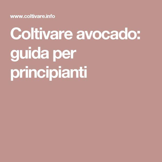 Coltivare avocado: guida per principianti