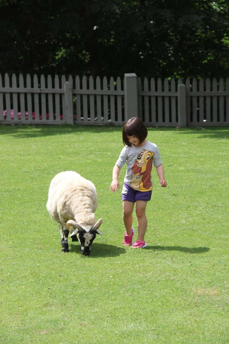 5 Questions with a 5-Year-Old visits Busch Gardens Williamsburg!