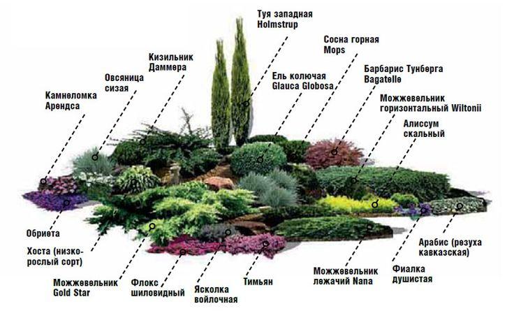 Схема клумбы с хвойными растениями