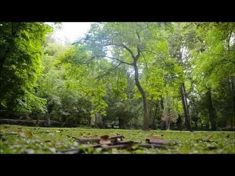 Sonidos Naturaleza-Sonidos Relajantes-Sonidos de Pájaros-Canto de Aves, ...