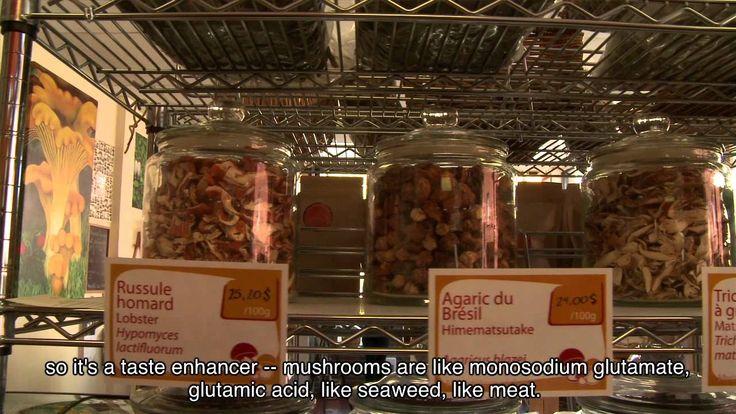 MYCOBOUTIQUE PAR BESO TV. Bien que nous soyons de plus en plus familiers avec les merveilleux produits du terroir québécois, la grande variété de champignons qu'on y retrouve reste assez méconnue du public.