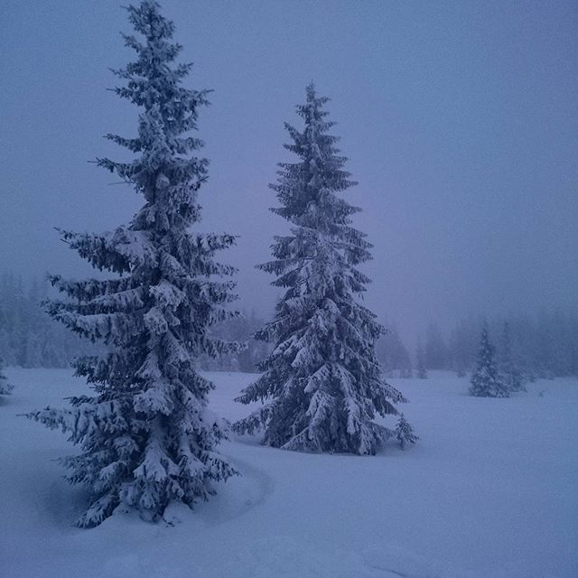 Den vakre blåtimen. #blåtimen #skumring #trolsk #stemning #natur #tre #uteinaturen #friluftsliv #Norge #Norway