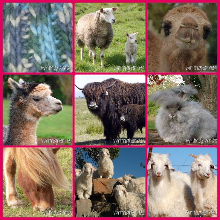 Wist je dat al deze dieren wol of haarvezels geven om kleding e.d. Van te maken? http://writingberries.blogspot.nl/2014/01/schaapje-geitje-konijntje-heb-je-witte.html