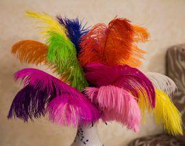 Penas de avestruz para venda