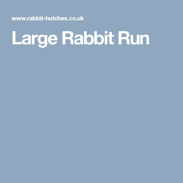 Large Rabbit Run
