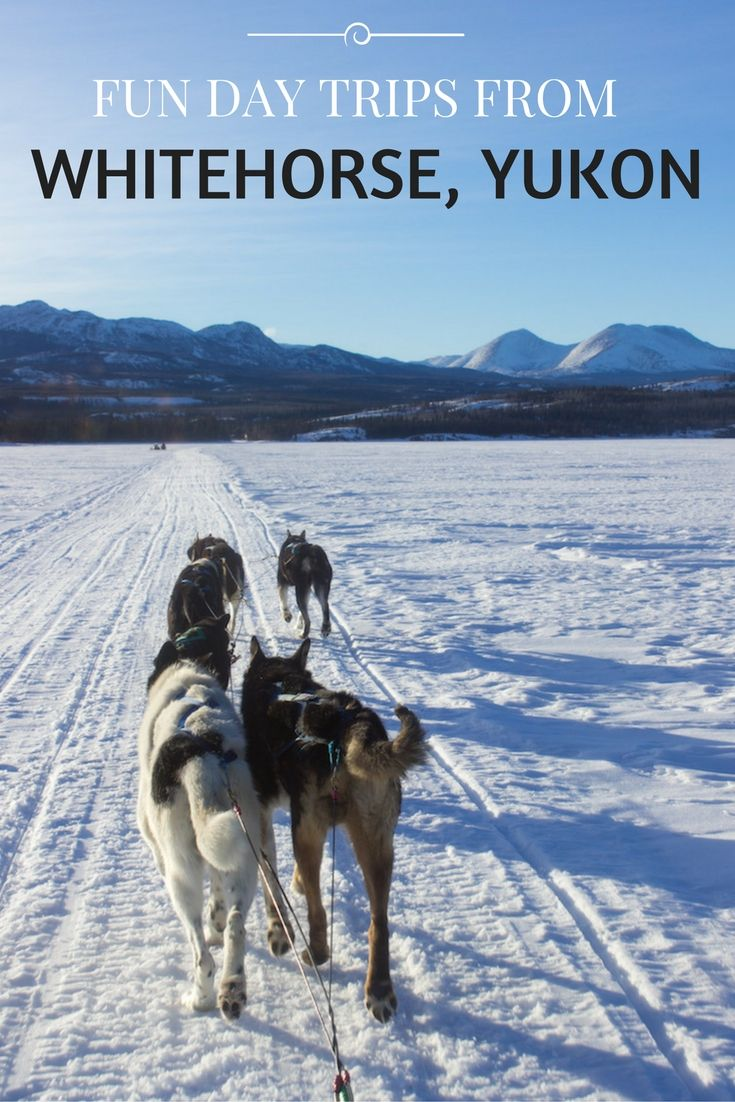 From dog sledding and horseback riding to Northern Lights viewing and glacier flight seeing, here are the best day trips from Whitehorse, Yukon, Canada.