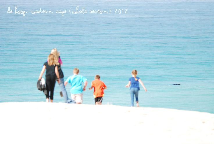 The family at De Hoop watching 21 whales off the beach at one time.