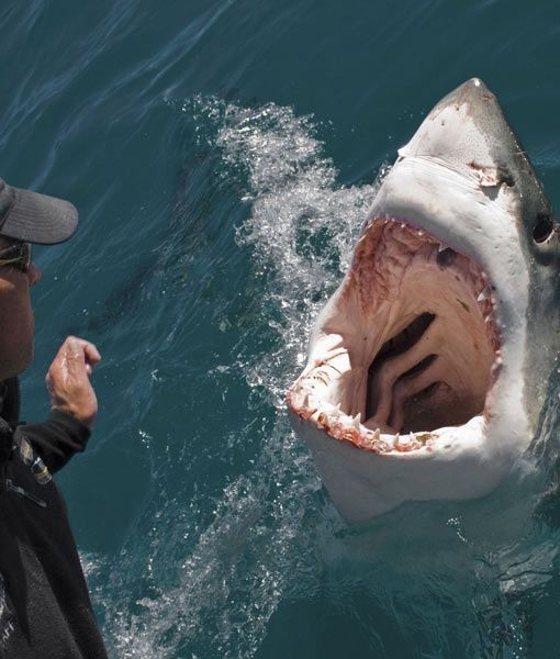 This shark may look like it wants to kill you but it really thought it was your next meal. Please don't kill sharks.