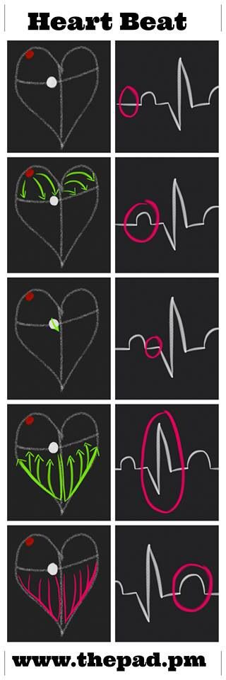 Super helpful way to visualize what an EKG means!