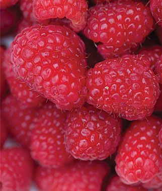 Tips for growing raspberriesFruit Gardens, Gardens Inspiration, Red Raspberries, Growing Raspberries, Fruit Plants, Everbear Raspberries, Colors Palettes, Fresh Fruit, Raspberries Plants