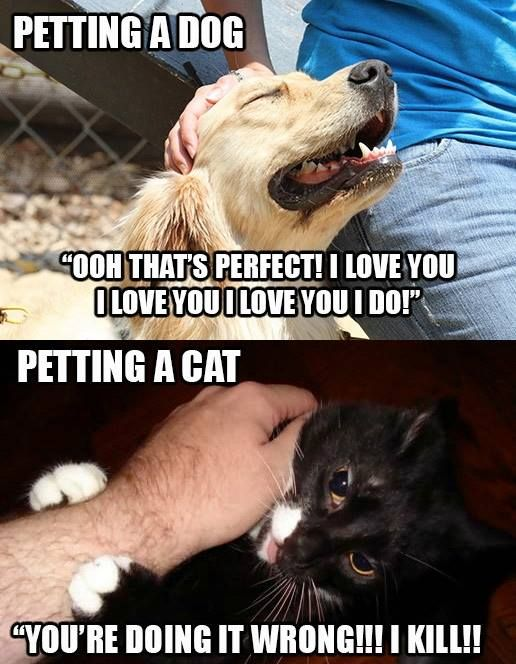Should Cats place petition to have equal status with dogs ?!!  Point to be noted Indeed !   #Australia #meme #funnymeme   Image Credit: Meanwhile in Australia