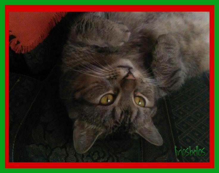 #Cat #MyCatTristan #photography  #love  #fromCostaRica  #byliriosbellos  #purelife #withPicsArt