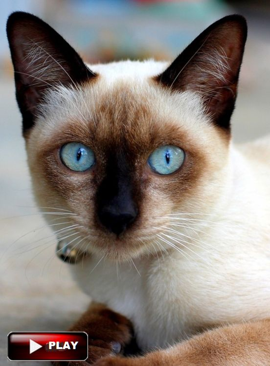 Youtube Cat Eye Tutorial: 117 Best CATS And KITTENS In Youtube Images On Pinterest