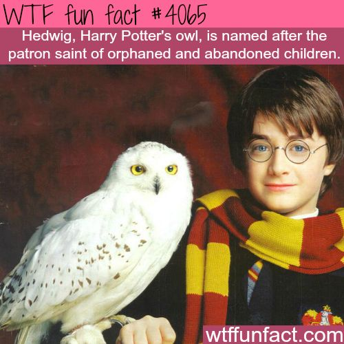 Hedwig, Harry Potter's owl - WTF fun facts